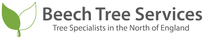 Beech Tree Services